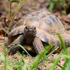 Patenschaft für Schildkröten