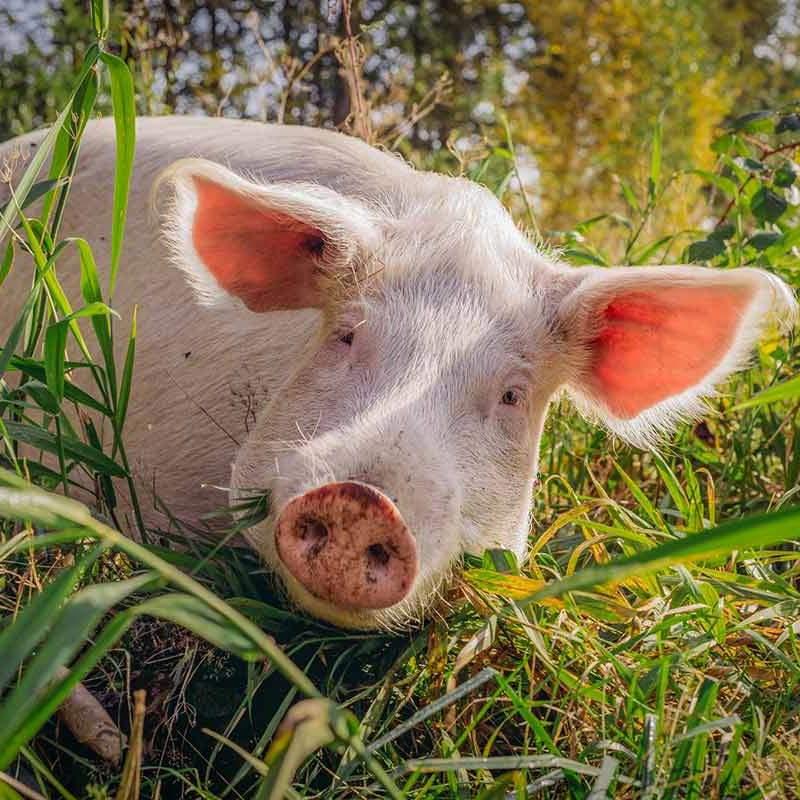 Rosalie im Land der Tiere, dem veganen Lebenshof zwischen Hamburg, Lüneburg und Berlin
