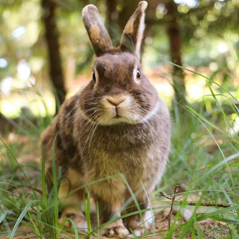 Kaninchen Freddy im Land der Tiere, dem veganen Lebenshof zwischen Hamburg, Lüneburg und Berlin