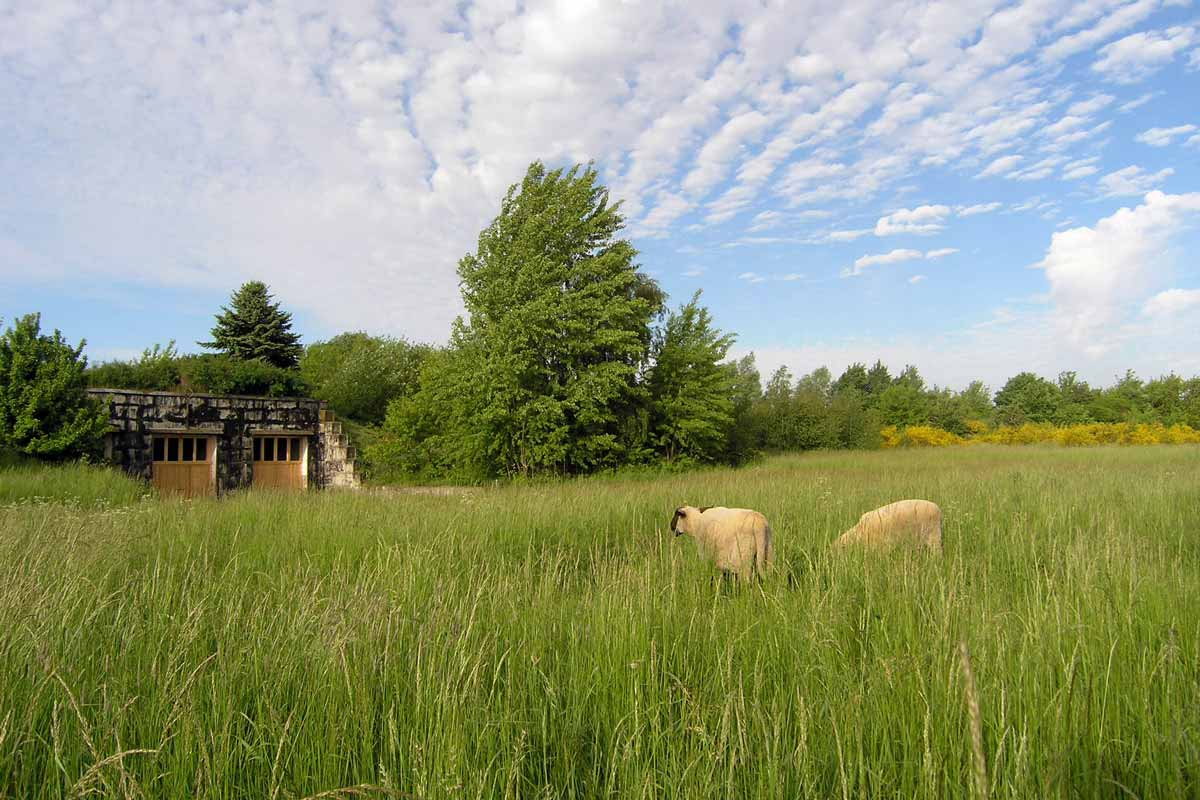 Das Schafland im Land der Tiere, dem veganen Lebenshof zwischen Hamburg, Lüneburg und Berlin