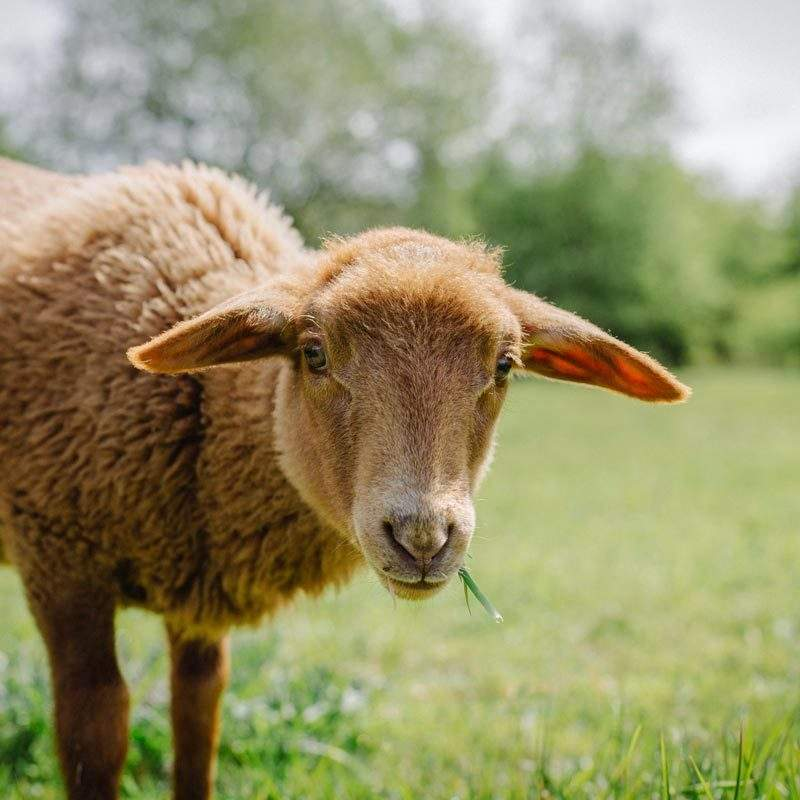 Valentina im Land der Tiere, dem veganen Lebenshof zwischen Hamburg, Lüneburg und Berlin