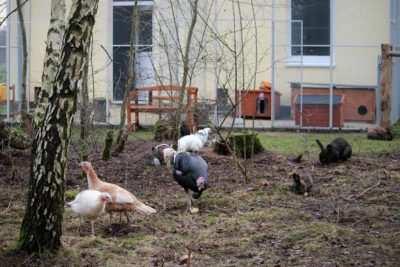 Gustav, Gesa und Josefine zu Besuch im großen Kaninchengehege