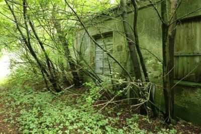 Der ehemals komplett verwachsene Haupteingang von Haus #1