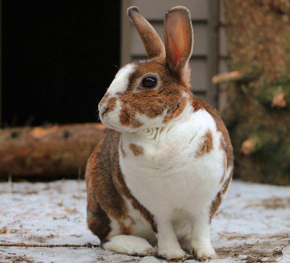 Kaninchen Leni im Land der Tiere, ein veganer Tierschutzhof zwischen Berlin, Hamburg, Lüneburg in Mecklenburg-Vorpommern
