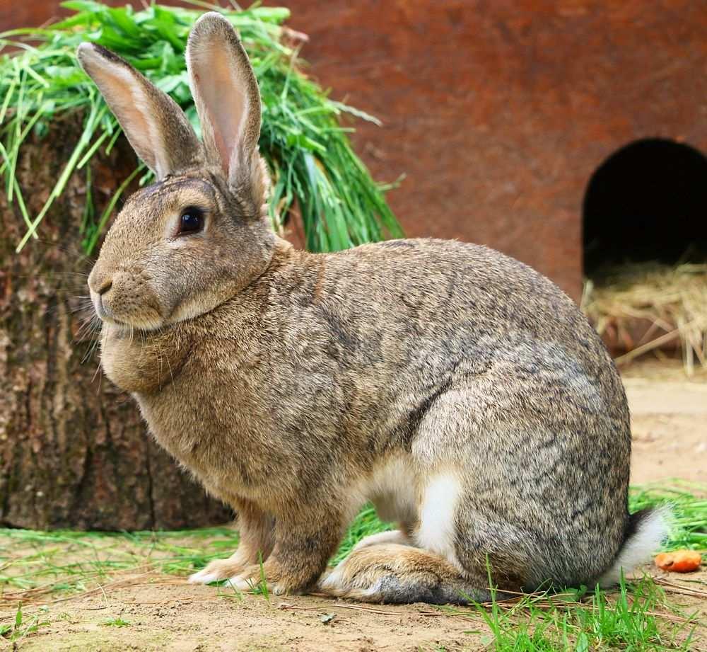 Kaninchen Heinrich im Land der Tiere
