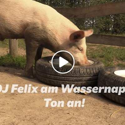 DJ Felix am Wassernapf