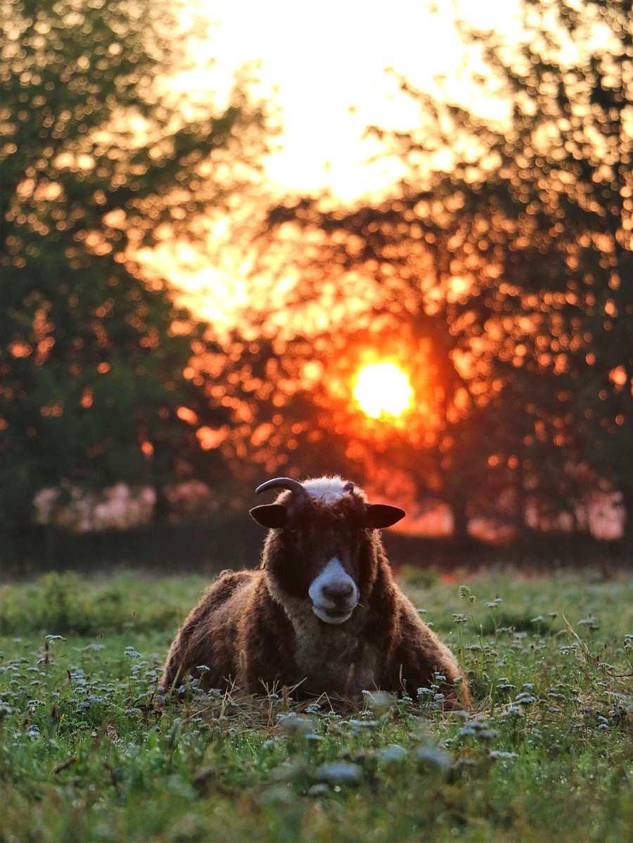 Rita, das alte Schaf im Land der Tiere