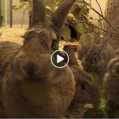 Familie Dr. Hasenbein, gerettete Kaninchen im Land der Tiere
